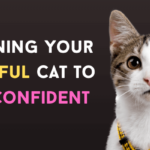 How To Help a Fearful Cat Gain Confidence?
